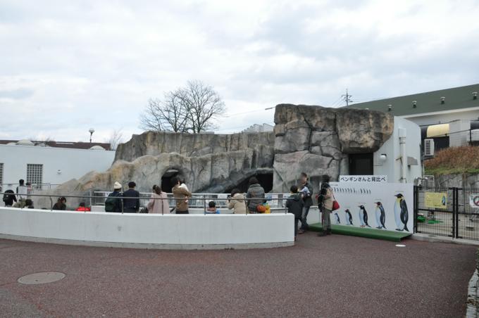 福山動物園 ペンギン